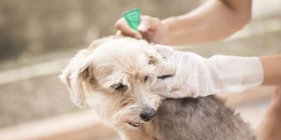 Pipetas para perros: qué son, cómo funcionan y cómo se aplican