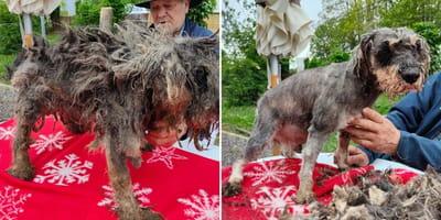 Onbegrijpelijke uitspraak Dierenwelzijn: verwaarloosde honden worden teruggeplaatst