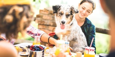 Summer foods you should not be sharing with your dog