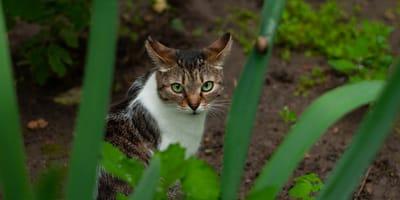 I 10 perché dei gatti (le curiosità più comuni sui mici)