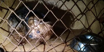 Esto es lo que escondía ilegalmente un veterinario en Bogotá