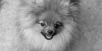 Geld regiert die Welt: Hundebaby Rikki zahlt den bitteren Preis