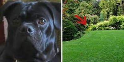 Pies na spacerze zamiera i nie chce się ruszyć: jego pan zauważa coś dziwnego w krzakach