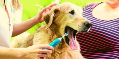 Come profumare l'alito del cane?