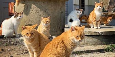 Mysteriöse Vorfälle auf Katzeninsel erschüttern Japan