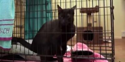 Gatto ritrovato dopo 16 giorni dal crollo del palazzo a Miami! (Video)