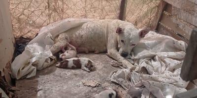 Murcia: madre con las patitas destrozadas de cavar buscando fresco para sus hijos necesita familia