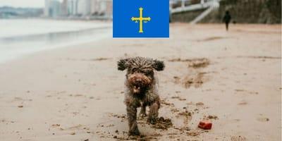 Playas para perros en Asturias 2021: ¿dónde disfrutar con tu perro a la orilla del mar?
