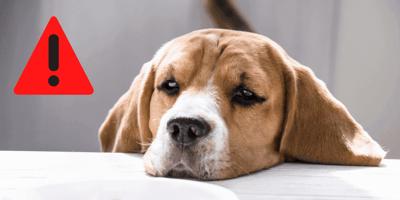 Hundefutter-Trend: Forscher warnen vor multiresistenten Bakterien