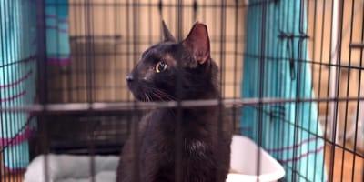 Este gato sobrevivió al colapso del condominio en Miami