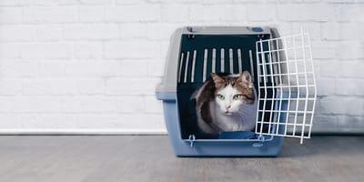 Nuestra selección de transportines para gatos de 2021