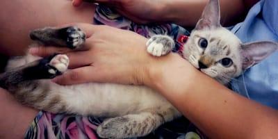 Perché i gatti leccano e poi mordono? I comportamenti strani