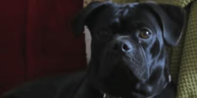 Cane a passeggio si blocca: c'è qualcosa tra i cespugli (Video)