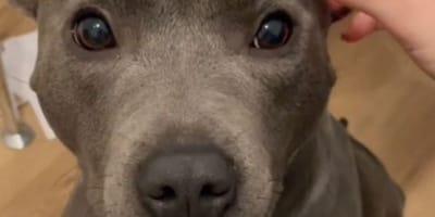 Opiekunka mówi psu, że jest piękny. Jego reakcja rozczuliła tysiące internautów (VIDEO)