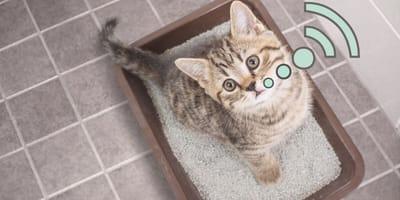 ¿Es grave si mi gato maúlla al hacer popó?