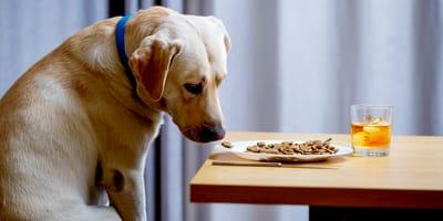 Come fare contro l'inappetenza del cane?