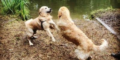 De oplossing voor mot met andere honden: losloopgebied op reservering!