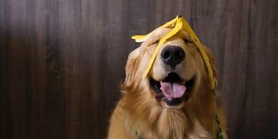 Mag een hond banaan?