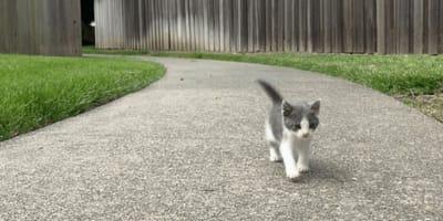 Kätzchen folgt Mann nach Hause: Hätte es nur vorher Bescheid gewusst ...