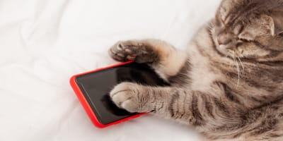 Katzenhalterin fällt aus allen Wolken, als sie Post von Vodafone bekommt