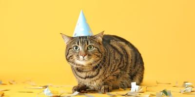 ¿Cuándo es el día del gato en México?