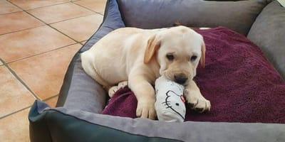 Mitten in Deutschland: Hundemafia hat zugeschlagen