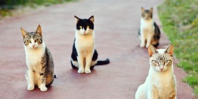 gatti in gruppo