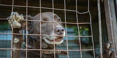 I risultati dell'esperimento sullo stress dei cani portati in canile