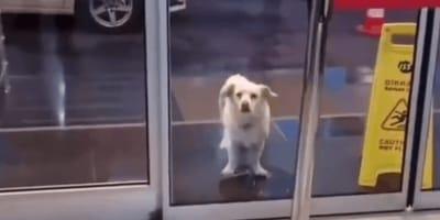 Pies od kilku dni stoi przed izbą przyjęć. Personel szpitala jest w szoku, gdy poznaje powód