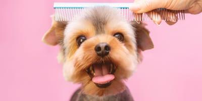 Come tosare un cane con la macchinetta casalinga?