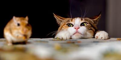 Gatto osserva un topo
