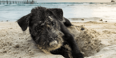 What happens if my dog ate sand?