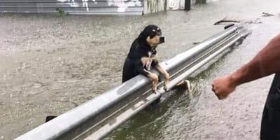 Alluvione in Europa: anche gli animali lottano per la sopravvivenza (Video)