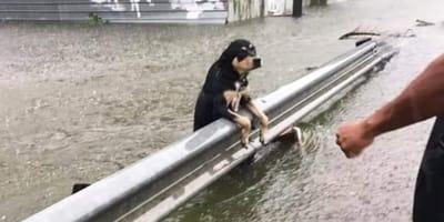 Tragedia w Niemczech: w powodzi stulecia masowo toną zwierzęta