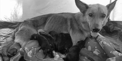 Pole namiotowe pod Wrocławiem: rodzinne wakacje z psami kończą się tragedią