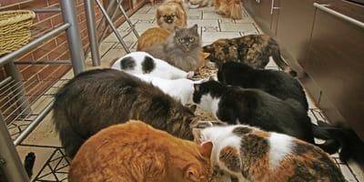 Liczba psów i kotów, które ta kobieta trzymała w domu, jest niewiarygodna!