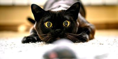 Il gatto predatore infallibile: strategie e armi in uso