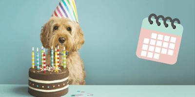 perro fiesta calendario
