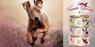 Los lectores de Wamiz han probado los MINI-Menús para perros pequeños de Terra Canis