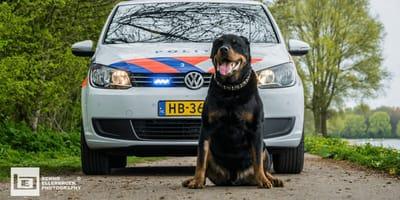 Podejrzany ścigany przez policję wskakuje do radiowozu... ze strachu przed psem