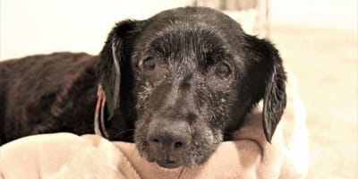 Mit abscheulicher Begründung: Hund im Müllsack im Tierheim abgegeben