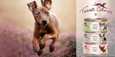 Test erfolgreich bestanden: Terra Canis MINIS für kleine Hunde
