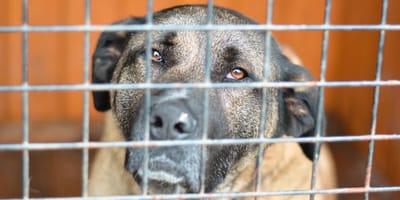 Hund in Käfig vor Tierheim ausgesetzt: Doch der Täter hat etwas vergessen...