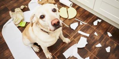 ¿Por qué los perros destrozan cosas en casa?