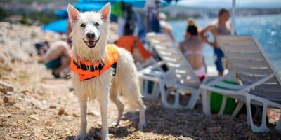 Chorwacja z psem – dokąd się wybrać z psem do Chorwacji?