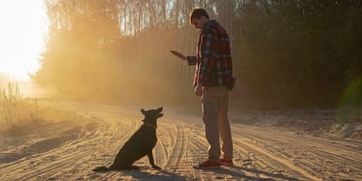 """Russe sagt """"bleib"""" zu Schäferhund: 9 Monate später kennt die ganze Welt sein Schicksal!"""