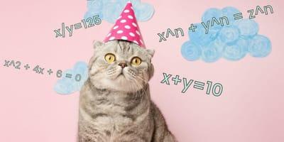 ¿A cuánto equivale un año de gato? Te decimos cómo calcularlo fácilmente