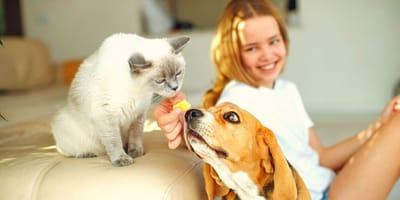ragazza felice a casa con cane e gatto