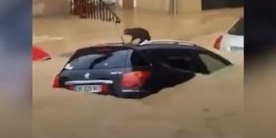 Flutkatastrophe: Kätzchen sitzt auf Auto fest, plötzlich rollt die Sintflut an (Video)