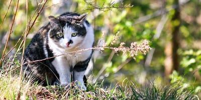 Friesland opgelet: dierenartsen waarschuwen voor dodelijke kattenziekte